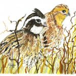 QUAIL WATERCOLOR1